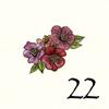 22.Anémone
