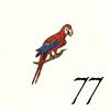 77.Perroquet
